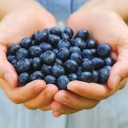 blueberries-in-hand-shutterstock_8400148