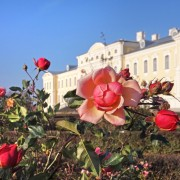 Pedeja-rudens-roze